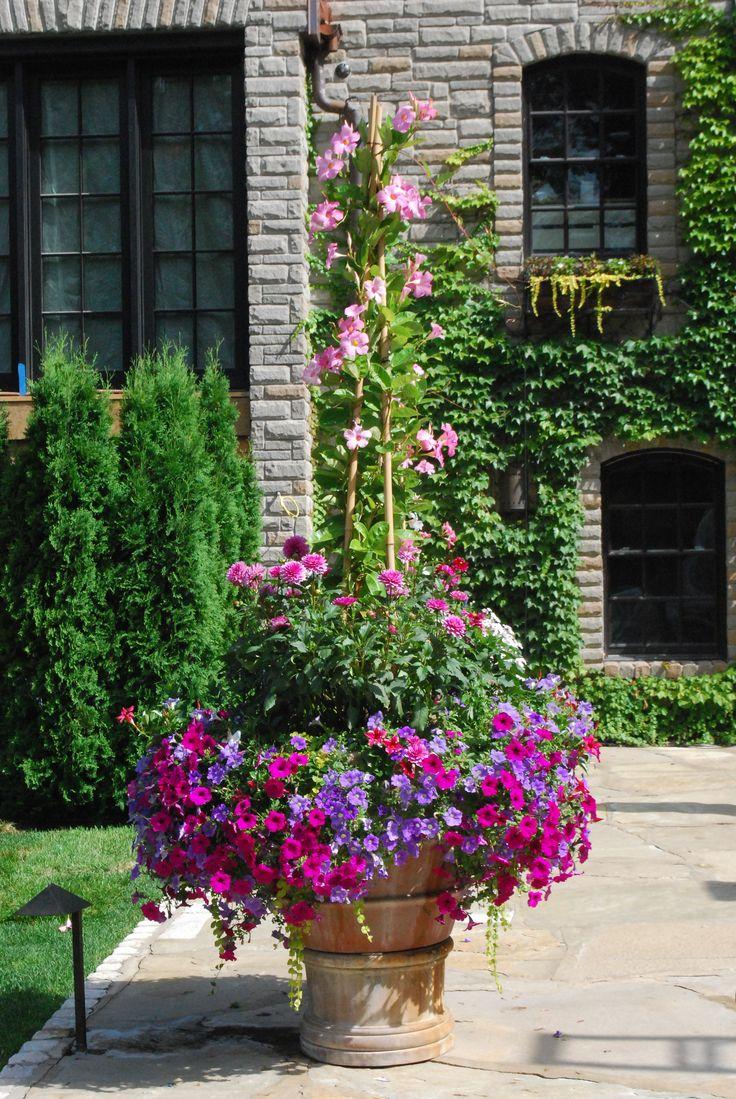 Mandevilla-Detroit Garden Works