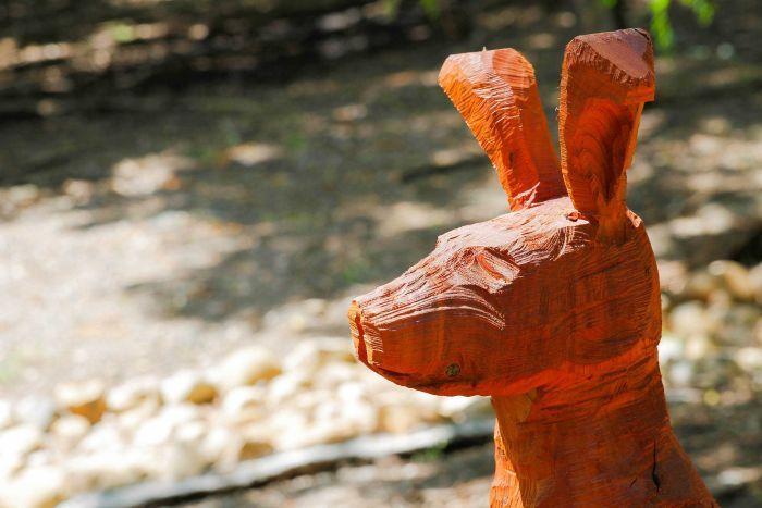Kangaroo close-up