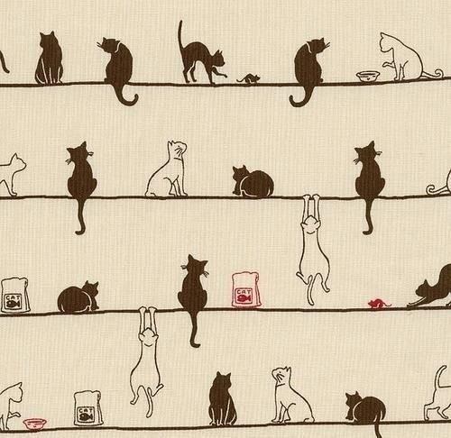 Here kitty, kitty....