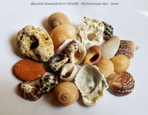 Sea Shells Surf Tumbled Ancient Pottery Hag Stone From Old Jaffa Israel Hag Stones Ancient Pottery Old Jaffa Articles about gemstones written by a gia graduate gemologist. pinterest