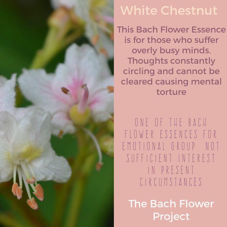 29 best bach flower remedies images on pinterest remedies flowers bach flower remedy white chestnut mightylinksfo