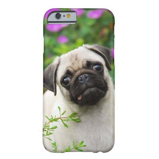 #Cute fawn pug puppy barely there #iPhone 6 #case   photographed by Katho Menden #zazzle