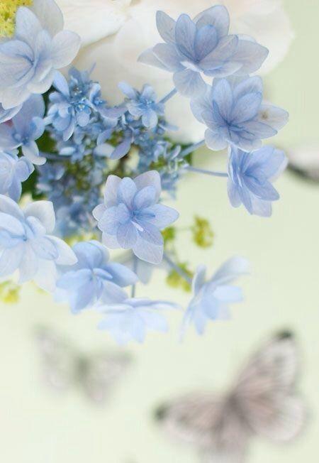 "voyagevisuelle: "" Forget Me Not - Anchusa 'Blue Angel' ~ VoyageVisuelle ✿⊱╮ """
