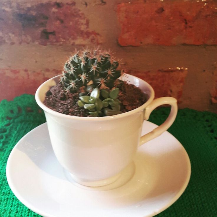 Taza antique Cactus sucus.