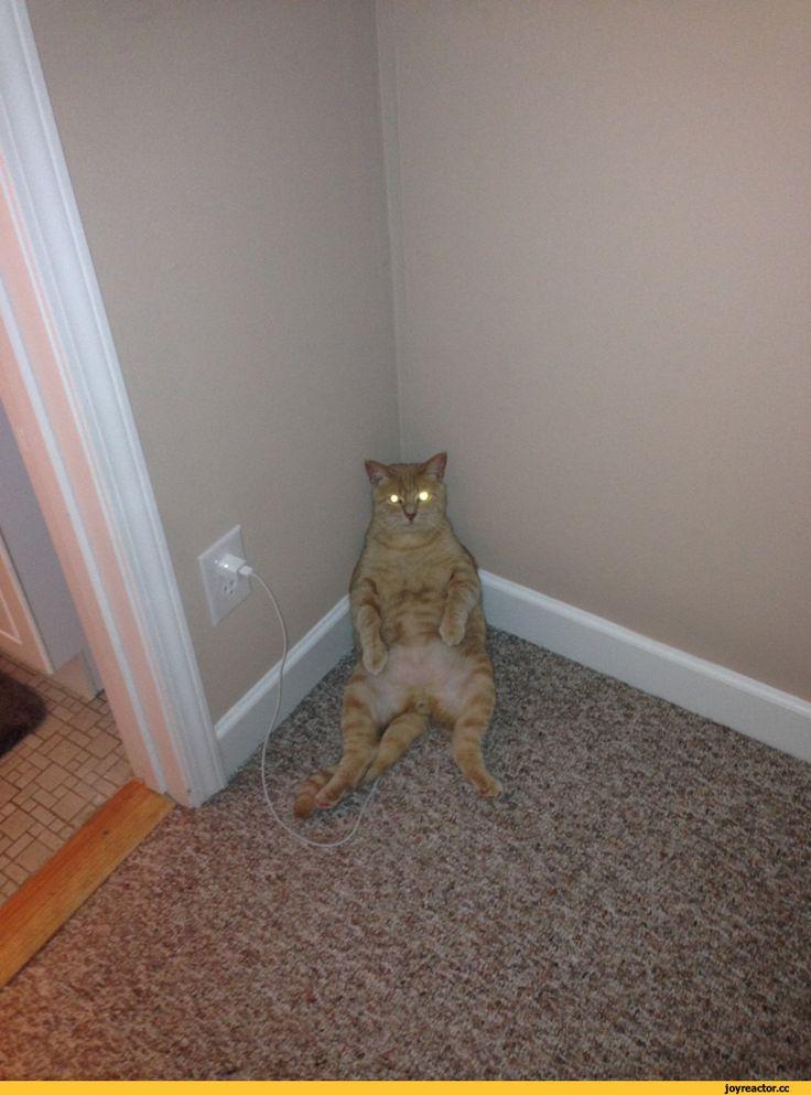 ПРИКОЛЫ:)))) | Смешные фото кошек, Смешные животные ...