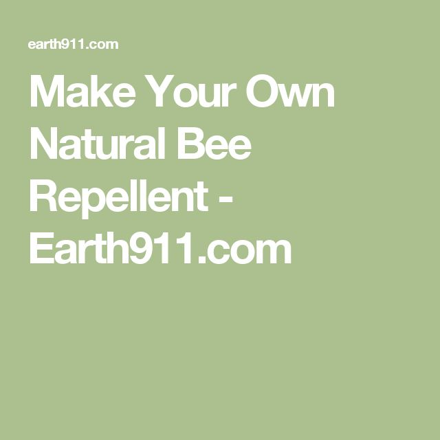 Make Your Own Natural Bee Repellent - Earth911.com