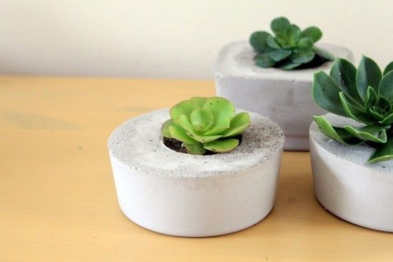 succulents in concrete containers • tortoise loves donkey
