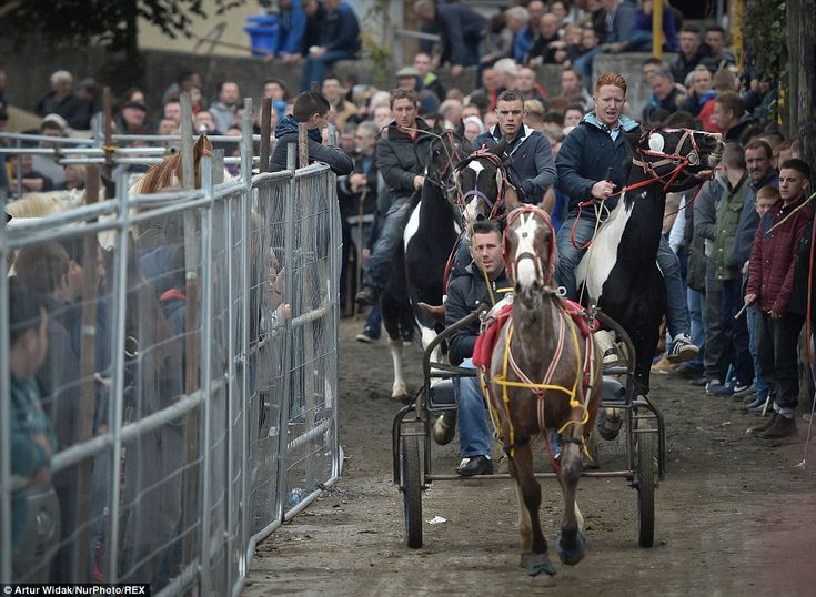 As well as riding the horses, competitors also race their animals on carts, which draws in...