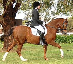 Missile and I need this!! 12 Tips to get your horse on the bit
