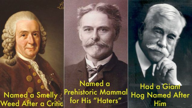 These Scientific Names Were Chosen Purely To Insult Certain People