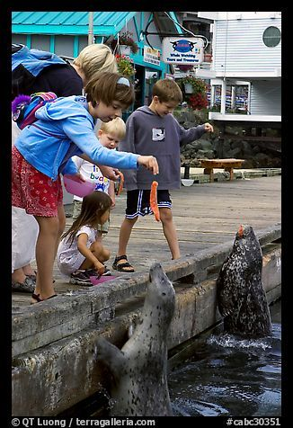Kids feeding harbour seals, Fisherman's Wharf. Victoria, British Columbia, Canada