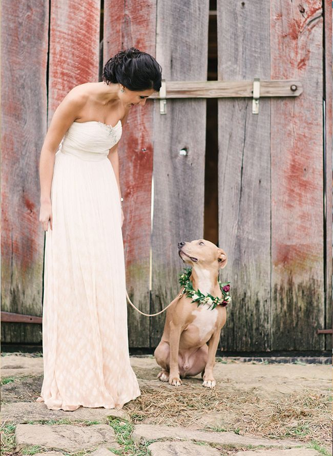 Here are a few favorite ways couples have included dogs in their wedding! Hopefully, you can gain inspiration on how to make your pup part of your wedding.