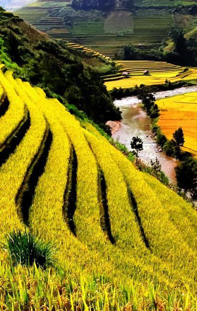 Agricultural Wonders in Vietnam