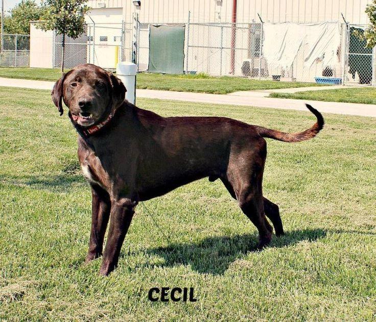 Cecil - york