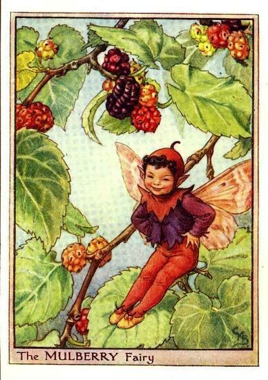 The Mulberry Fairy Cicely Mary Barker