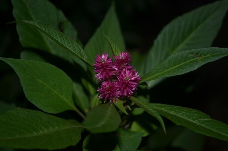 :) Flower 2