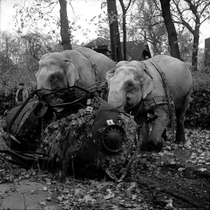 Elefantes del circo de Hamburgo colaboran en la remoción de escombros después de los bombardeos de 1945 Vía Gastón Ribba http://www.facebook.com/ribba.gaston