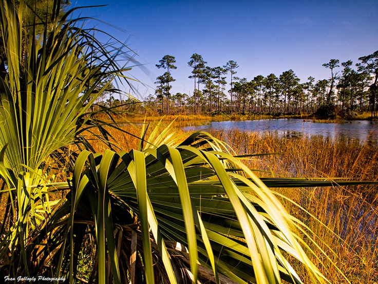 Pin by Fran Gallogly on I Love Florida! | Pinterest