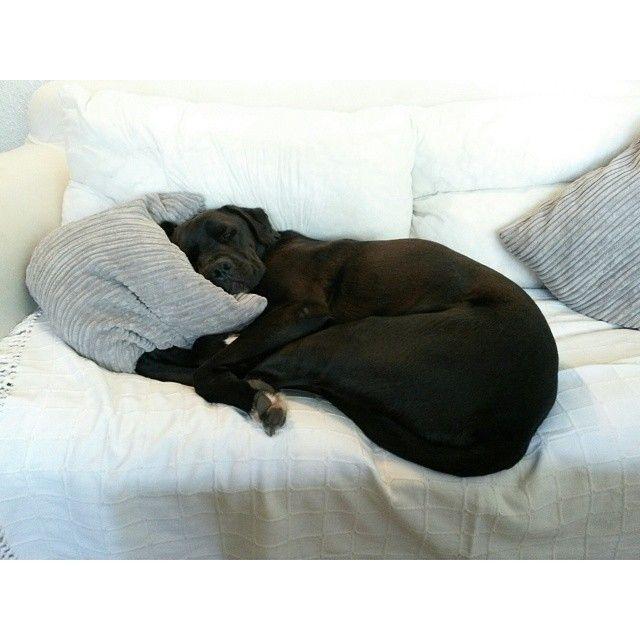 Emma Philip designer - My dog Bentley in dreamland    #dog #dream
