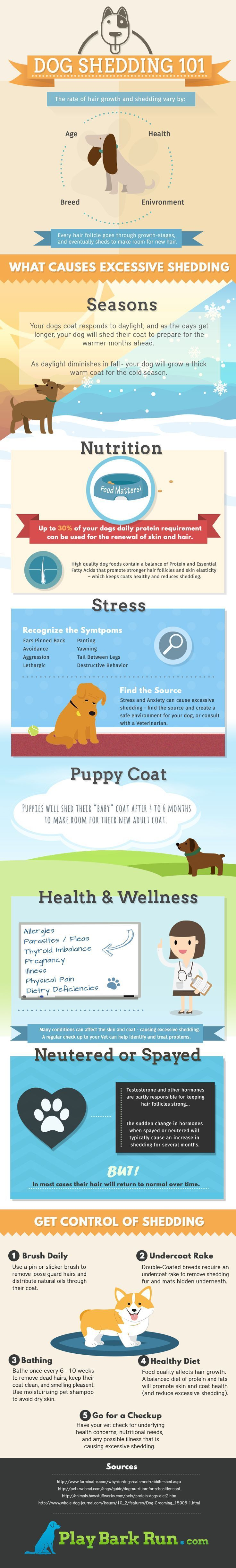 A visual guide to dog shedding - what causes shedding? how much is too much? and how do you control all that pet hair?