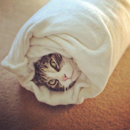 oh my.... meow cat :/: Kitty Burritos, Cat Rolls, Crazy Cat, Gonna Rolls, Burritos Supreme, Shower, Cat Sushi, Cat Burritos, Cat Lady