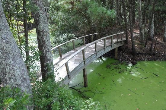 Nags Head Woods Preserve Kill Devil Hills Nc Http Www