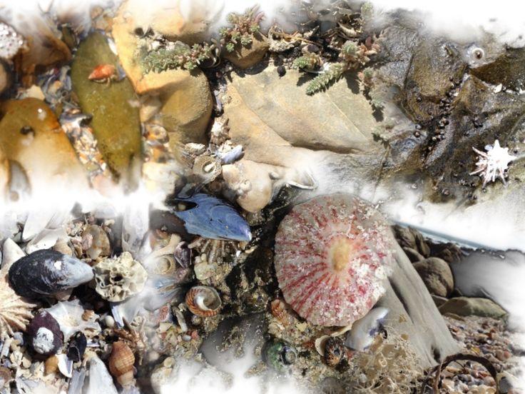 Little sea treasures from Kogel Bay