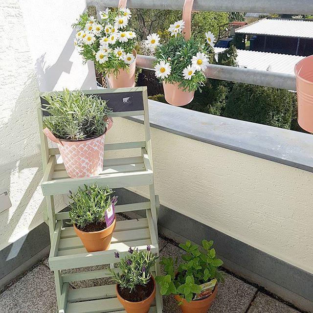 Pimped our balcony  Blumenetagere ab heute bei Pflanzen Kölle  #balkony #balkon #floweroftheday #flowers #interiordesign #balconyview #balconylife #homesweethome #rangsdorf #pflanzenliebe #balkoninspiration #balconyinspiration