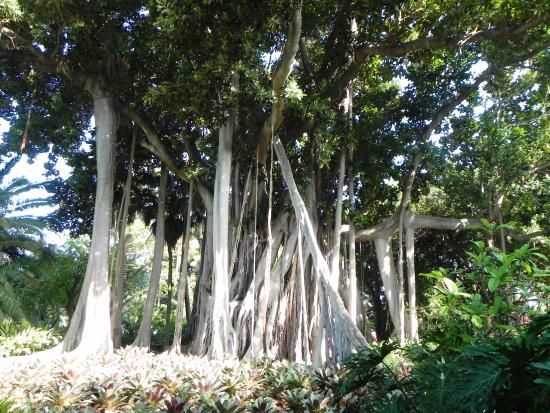 Images of Botanical Gardens (Jardin Botanico), Puerto de la Cruz - Attraction Pictures - TripAdvisor