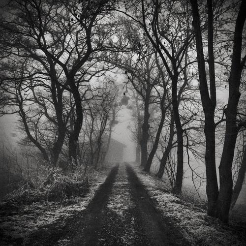 Dark: Favorite Places, Art Dark, Art Animal, Landscape Dark, Black White, Dark Forests, Dark Art, Forests Woodland, Woodland Fairies