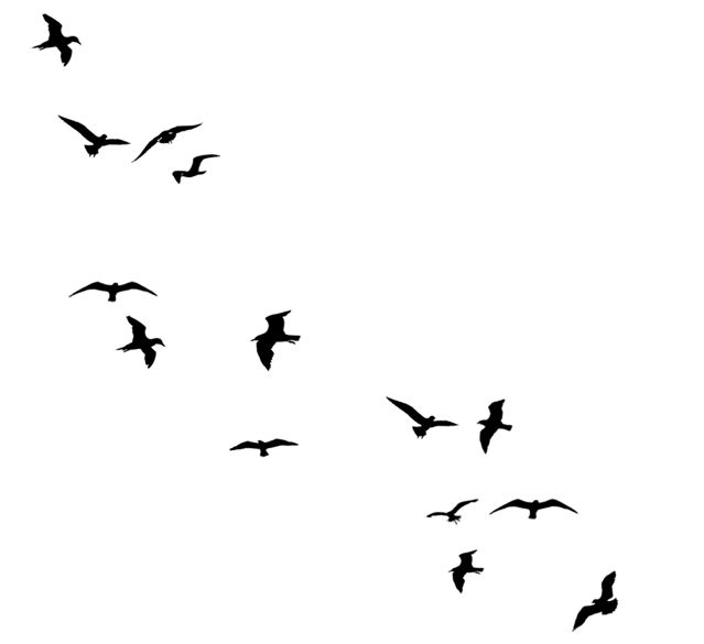 Birds flying away silhouette line