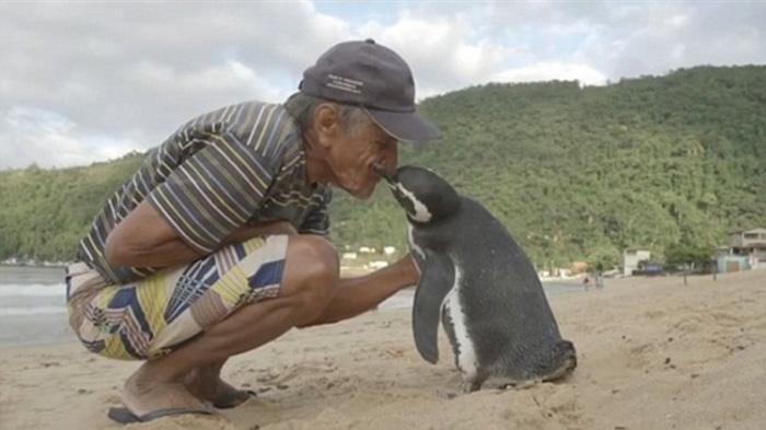 Bikin Haru! Balas Budi, Penguin Ini Berenang 8000 Km Tiap Tahun Demi Bertemu Penyelamatnya