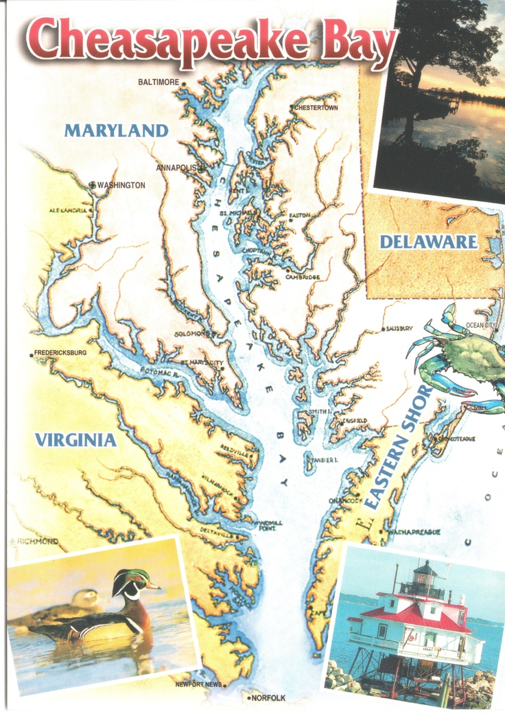 163 best growing up in maryland images on pinterest for Chesapeake bay fishing map