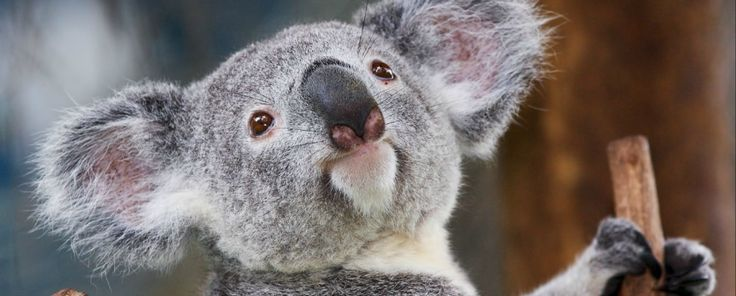 Australia Tours and Trip Guide. Find the best Australia guided tours & trips! Read reviews, compare prices and itineraries.