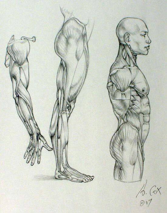 Mejores 99 imágenes de Anatomia para artistas en Pinterest ...