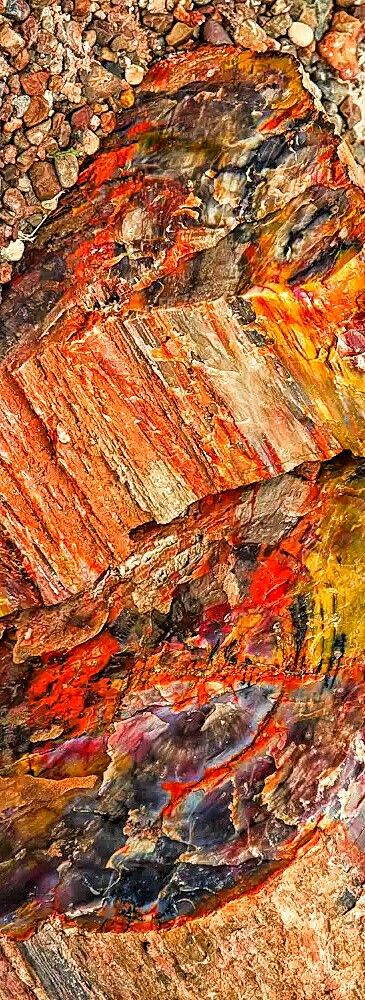 Petrified wood Petrified Forest National Park Arizona is known for its fossils, especially of fallen trees that lived in the Late Triassic period of the Mesozoicera, about 225 million years ago. During this period, the region that is now the park was near the equator on the southwestern edge of the supercontinent Pangaea, and its climate was humid and sub-tropical.What later became northeastern Arizona was a low plain flanked by mountains to the south and southeast and a sea to the west