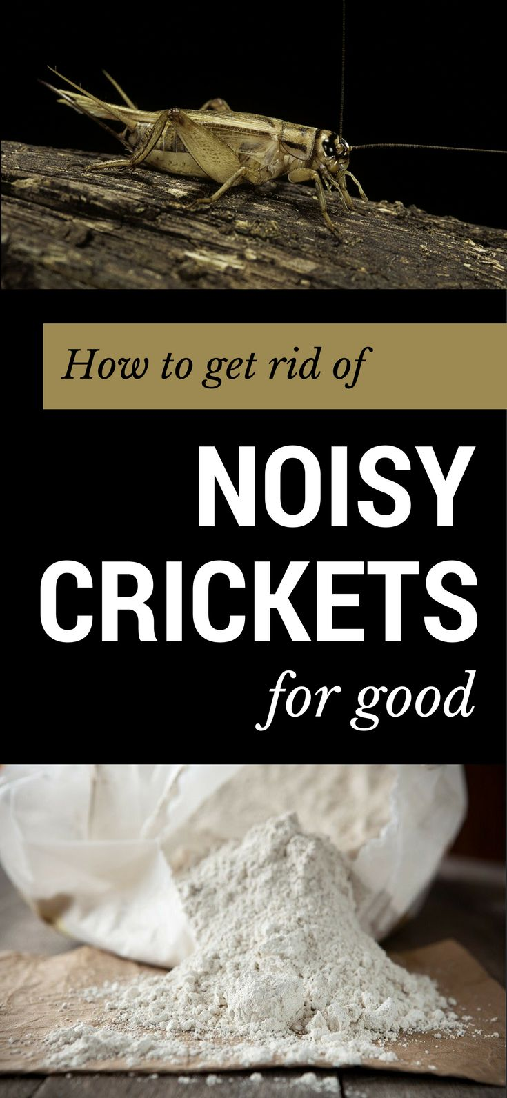 These are the best methods to get rid of noisy crickets for good.