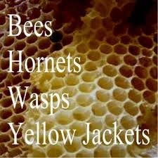 DIY... Problems with hornets, wasps, & Yellow Jackets... here is the solution for ridding your area of these pesky insects.