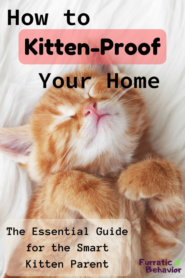 How To Kitten Proof Your Home Furratic Behavior In 2020 Kitten Proofing Kitten Care Getting A Kitten