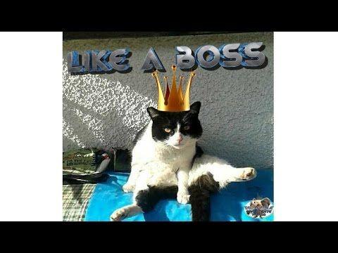 ➤ Like a BOSS - Gatti pazzi( Compilation Maggio - 05 2017 )