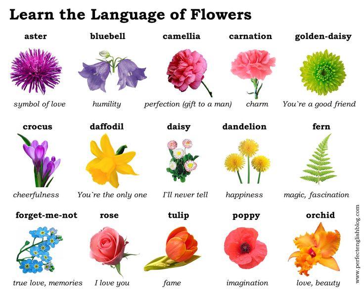 Учим язык цветов
