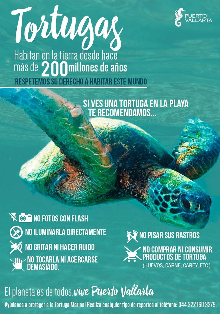 Tortugas Marinas en Puerto Vallarta. ¡Ayúdanos a proteger y preservar su especie!