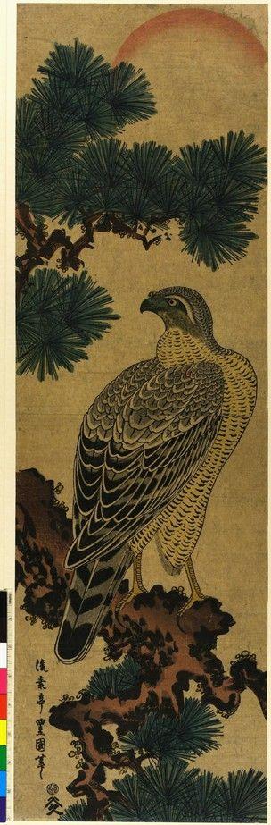 Woodblock print. Kachoga. Falcon on a pine branch, rising sun above. Nishiki-e on paper.