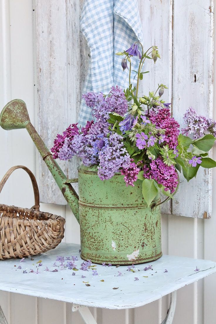 Nicely weathered vintage green painted watering can filled with fragrant lilac and aquilegia