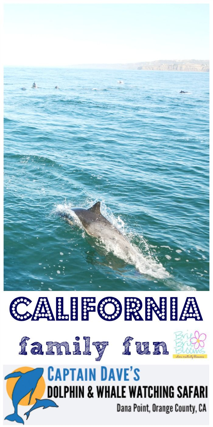 Your family will enjoy learning about animals and the ocean aboard a boat with Captain Dave's Whale & Dolphin Safari. The Dana Point whale watching experience is amazing!