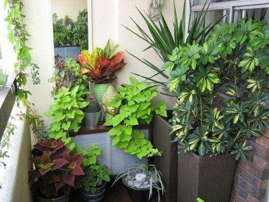 Minimalist apartment balcony garden