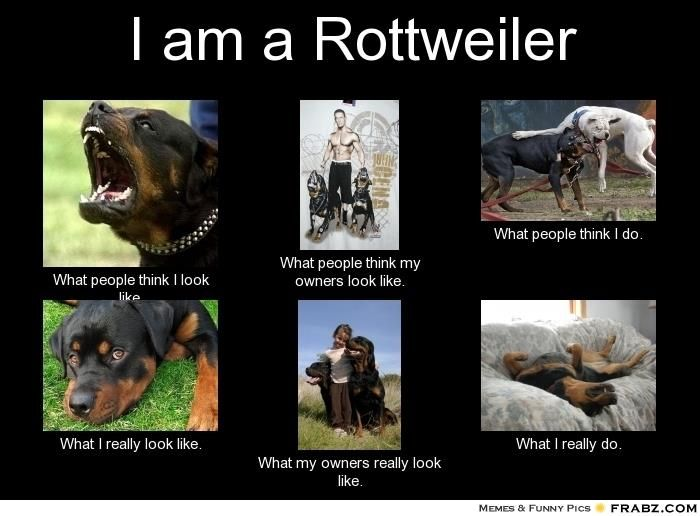 Lol aww that middle bottom pic reminds me of our rott and baby girl, he is so gentle with her
