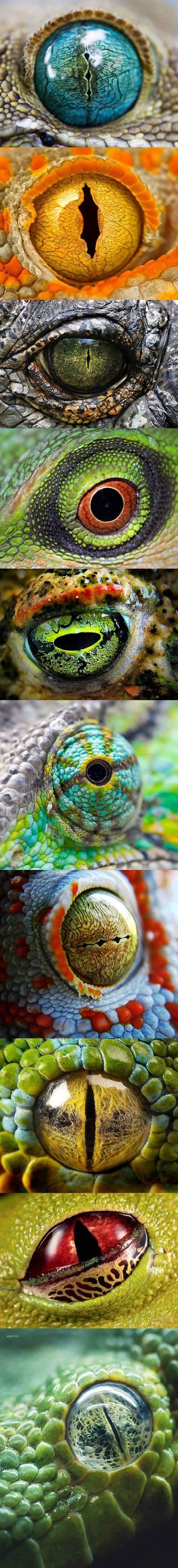 The round pupil in a lizard is generally better adapted for diurnal species whereas slit pupils are found in nocturnal species.  Most lizards can see in color and some have opsin proteins which allow them to see in ultraviolet wavelengths that the human eye cannot perceive.