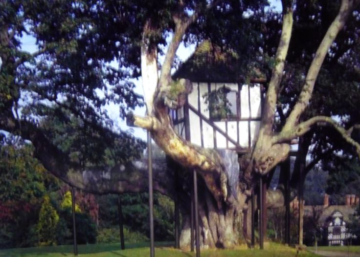 Treehouse and house