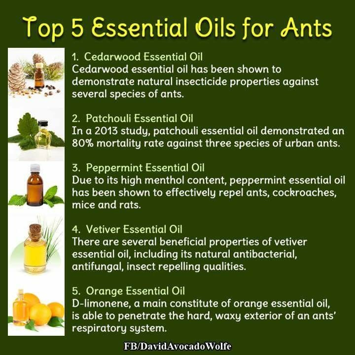 Oils To Deter Ants Termite Treatment Natural Insecticide Pest Control